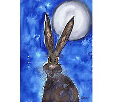 HARE IN THE MOONLIGHT Photographic Print