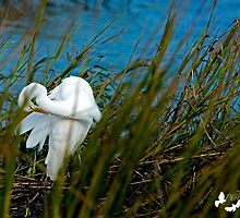 Nestled in The Marsh Grass by TJ Baccari Photography