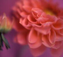 Pink Flowers by Tamarra