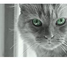Eyes of Green ~ Photographic Print