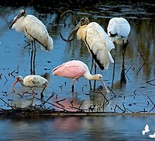 Spoonbill and Friends by TJ Baccari Photography