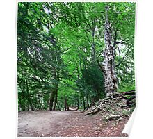 The Enchanted Forest Path Poster