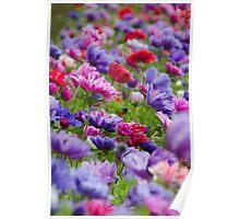 Tulip Flower Garden Poster