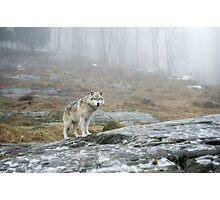 Beyond the Fog Photographic Print