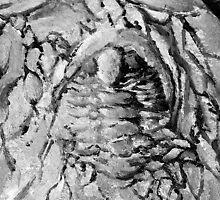 Painted Trilobite Fossil - black & white by Glendon Mellow