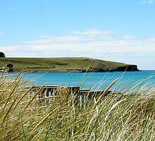 Godfreys Beach Stanley by Michelle Ricketts