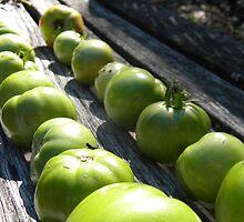 Last Tomato Harvest by jessicacbarker