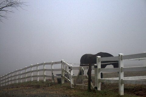 Fog at the Farm by RockyWalley