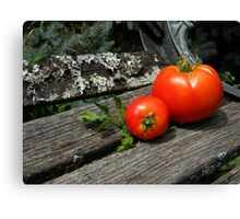 First Tomato Harvest Canvas Print