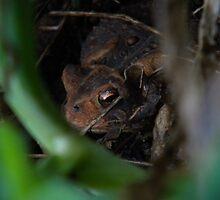 Hello, Mr. Toad by jessicacbarker
