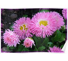 Vibrant Pink Asters in Mirror Frame Poster