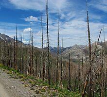 Rocky Mountain Wilderness, Montana by Claudio Del Luongo