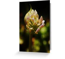 spring blossoming Greeting Card