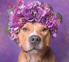 Flower Power, JD by Sophie Gamand