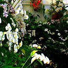"""""""Orchids in Greenhouse 60"""" by Chip Fatula by njchip123"""