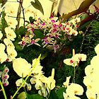 """""""White Orchids"""" by Chip Fatula by njchip123"""