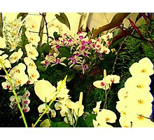 """White Orchids"" Photographic Print"
