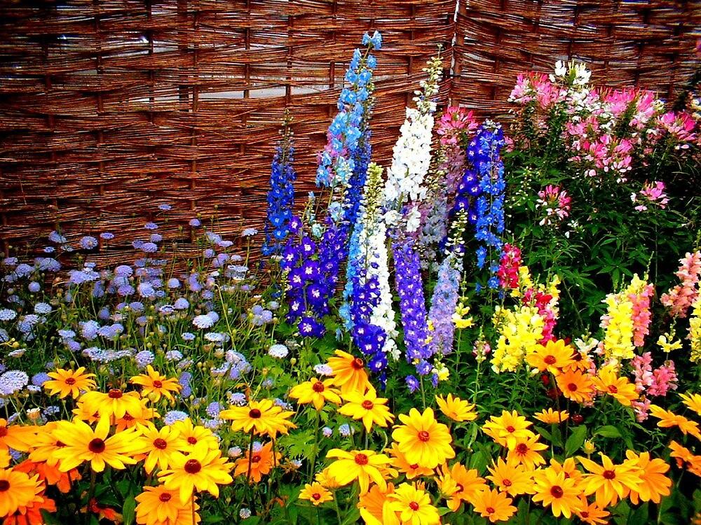 """""""Garden Flowers 2"""" by njchip123"""
