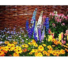 """Garden Flowers 2"" Photographic Print"