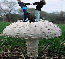 Fungi Rock by Eric Kempson