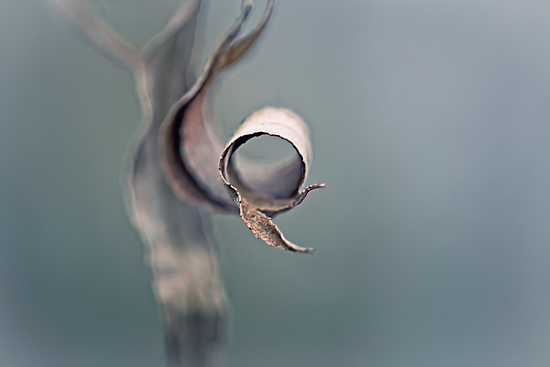 Persistence by Bob Daalder