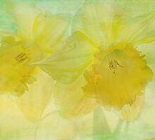 hint of spring by Teresa Pople