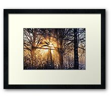 Cathedral of light Framed Print