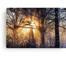 Cathedral of light Canvas Print