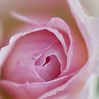 Macro of  a rose - Case by nikavero