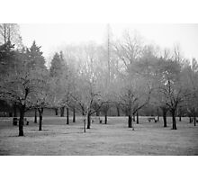 Foggy Day. B&W photo of naked winter trees. Photographic Print