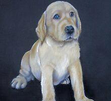 Labrador Pup by Redbarron