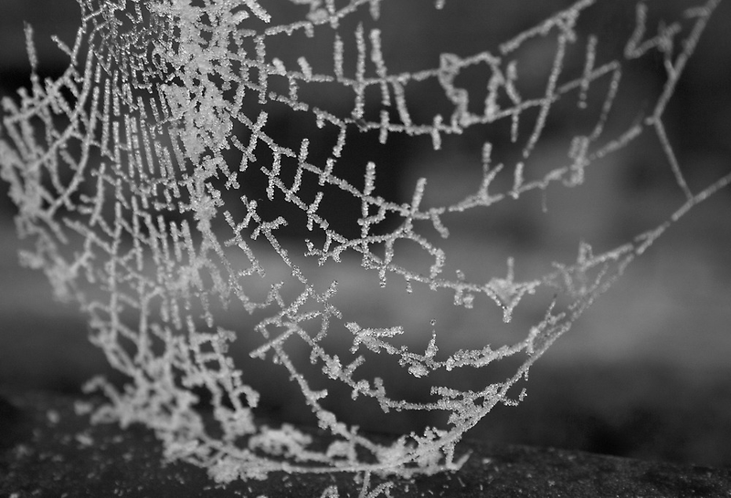 Web of Winter by James Taylor