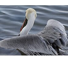 Pelican's Elegance - Elegancia Del Pelicano Photographic Print