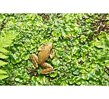 The FROG - Poster/Canvas Photographic Print