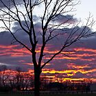 Morning Sunrise Across the Field by Scott Wood