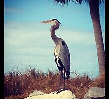 MIGHTY HERON by katemmo