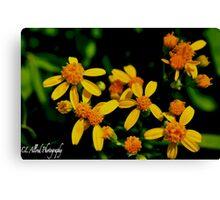 Mountain Yellow/Orange Flowers Canvas Print
