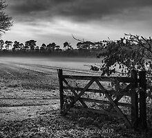Winter Fields by Paul Holman