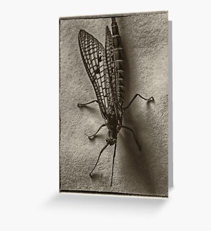 mayfly Greeting Card