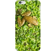 The FROG - iPhone iPhone Case/Skin
