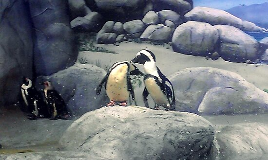 Penguins by kayberry2five