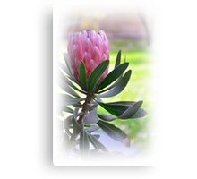 Una  flor....... Canvas Print