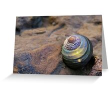 Sunset wrapped Seashell Greeting Card