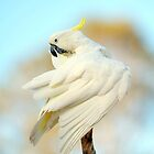 Sulphur Cockatoo At Cedar Creek. Queensland, Australia. (2) by Ralph de Zilva
