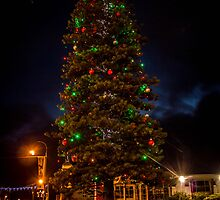 Albany Christmas Tree by Travis Szylak
