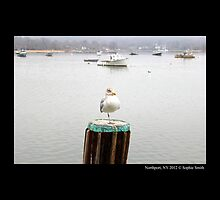 Larus Delawarensis - Ring-Billed Gull Standing On One Leg In Northport Harbor, New York by © Sophie W. Smith