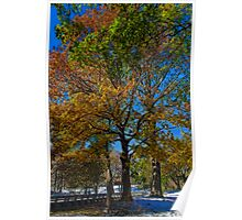 USA. New York. Central Park. Colors of the Autumn. Poster
