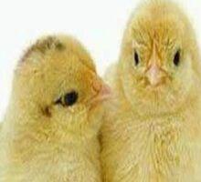 baby chickens with guns Sticker