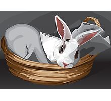 Odin Bunny Photographic Print