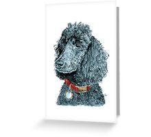 Black Poodle Greeting Card